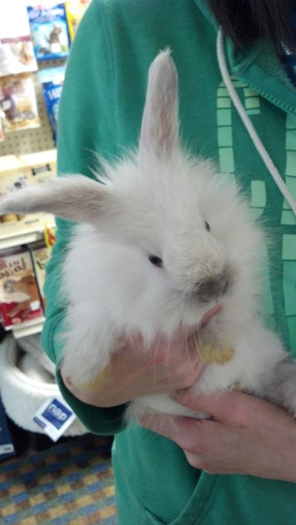 So bunny.